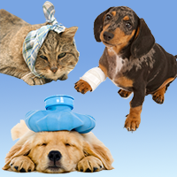 Do you have a pet needing emergency medical care?