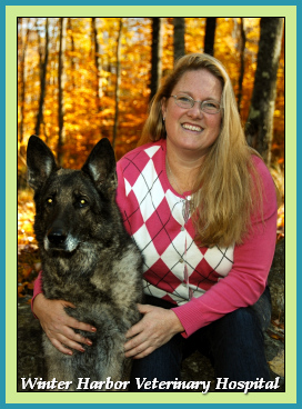 Dr. Rachel Keyser, D.V.M. at Winter Harbor Veterinary Hospital with Ilse