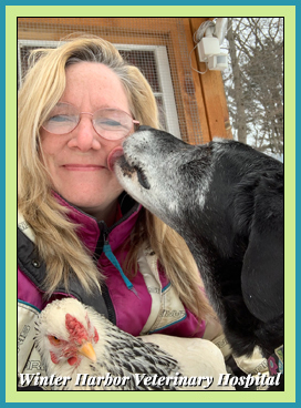 Mary Ellen Smallidge, VeterinarianTechnician at Winter Harbor Veterinary Hospital with Brooke
